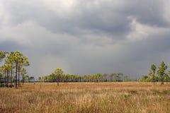 everglades τοπίο Στοκ Εικόνες