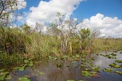 everglades стоковое изображение