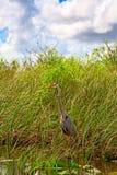 everglades стоковая фотография rf