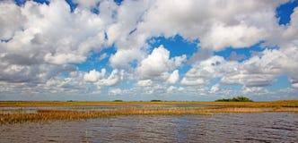 everglades стоковые изображения