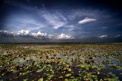 Everglades stock foto's