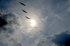 Everglades stock fotografie