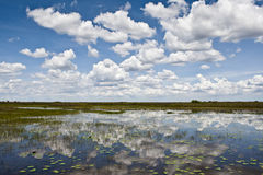 Everglades. The Florida Everglades . This was taken from the swamps which showed the reflection of the sky in the water stock photography