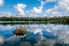 Everglades 0347 Στοκ εικόνες με δικαίωμα ελεύθερης χρήσης