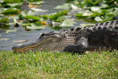 Free Everglades Stock Photography - 5704222