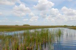 everglades стоковая фотография
