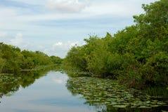everglades стоковое изображение rf