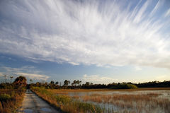 Everglades Backcountry Trail. A backcountry ORV trail cuts through a sawgrass prairie in the Florida Everglades, Big Cypress National Preserve Stock Photos