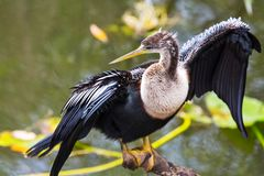 Everglades birds Stock Image