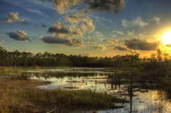 Everglades Bliss. Sunset in the Everglades with the sun, bright blue sky, clouds and water running through Royalty Free Stock Photography