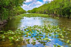 Everglades channels with mangrove plants in each side, USA. Everglades channels with mangrove plants in each side. The Everglades or Pa-hay-okee is a natural stock photography