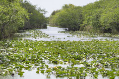 Everglades channels with mangrove plants in each side, USA Royalty Free Stock Photo
