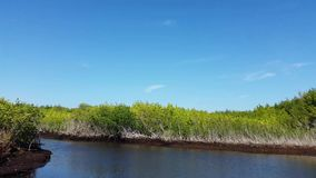 Everglades city, Florida, USA. Airboat tours at the mangrove forest stock footage