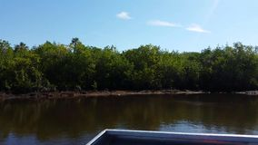 Everglades city, Florida, USA. Airboat tours at the mangrove forest stock video footage