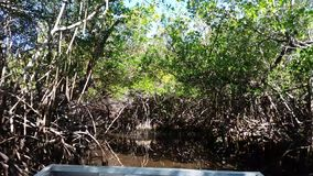 Everglades city, Florida, USA. Airboat tours at the mangrove forest stock video