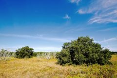 Everglades Coastal Prairies -1 stock image