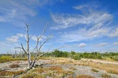 Everglades Coastal Prairies Royalty Free Stock Image