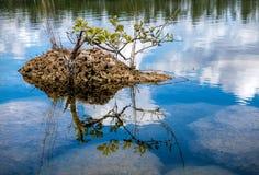 Everglades 0346 royalty free stock photos