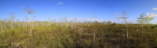 Everglades Cypress Landscape Panorama Royalty Free Stock Photo