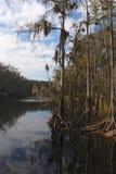 everglades florida Arkivbilder