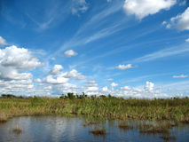 Everglades in Florida Royalty-vrije Stock Afbeeldingen