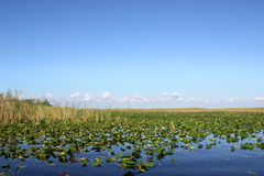 Everglades Florida Stock Image