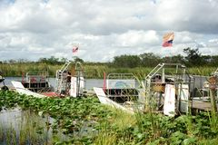 Everglades - Florida Royalty Free Stock Images