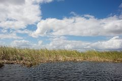 Everglades - Florida Stock Images