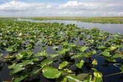 Everglades - Florida Royalty Free Stock Photos
