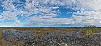 Everglades, Florida. Scenic landscape of the Florida Everglades stock photography