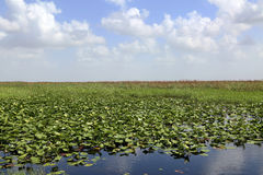 Everglades, Florida Stock Image