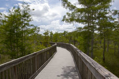 Everglades. The Everglades in Florida - Usa stock photography