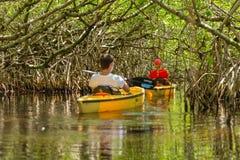 EVERGLADES FLORIDA, USA - AUGUSTI 31: Turist som kayaking i mangro arkivfoto