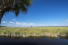 Everglades Florida USA Stock Photo