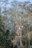 Everglades, Florida, USA Stock Photography
