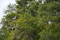 Everglades, Florida, USA Stock Photo