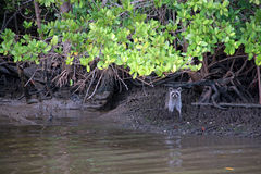 Everglades, Florida, USA Royalty Free Stock Images