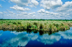 The Everglades- II Royalty Free Stock Photography