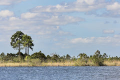 Everglades Lake Royalty Free Stock Image