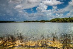 Everglades Lake Stock Photos