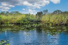 Everglades Lake Royalty Free Stock Photo