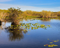 Everglades Landscape. Everglades marshes seen from the Anhinga Trail Royalty Free Stock Photo