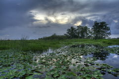 Everglades landscape. Ominous clouds over the everglades Stock Photography