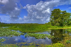Everglades landscape. Beautiful day over the Everglades Stock Photography