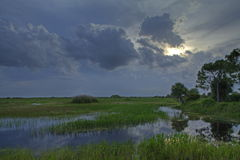 Everglades landscape Stock Images