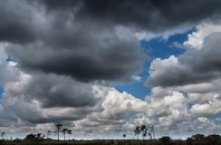 Everglades Landscape, clouds Stock Images