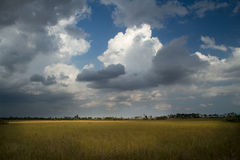 Everglades Landscape. Florida everglades in dramatic light with clouds Stock Image