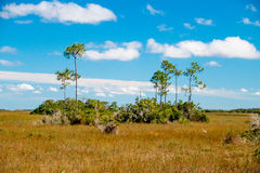 Everglades landscape Royalty Free Stock Images