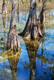 Everglades landscapes Stock Images