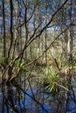 Everglades landskap att reflektera i ett träsk Royaltyfri Fotografi